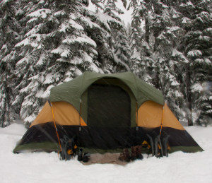Tent in Pines